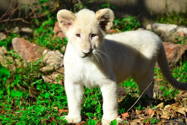 Photo credit:  Animal World & Snake Farm Zoo