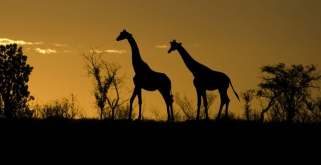African Safari with Music from 'The Lion King' at Houston Symphony