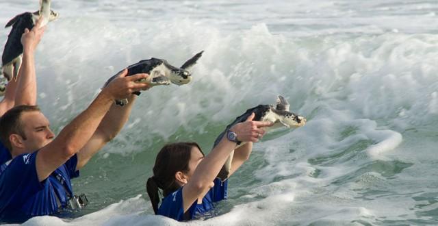 SeaWorld parks to celebrate World Oceans Day on June 8