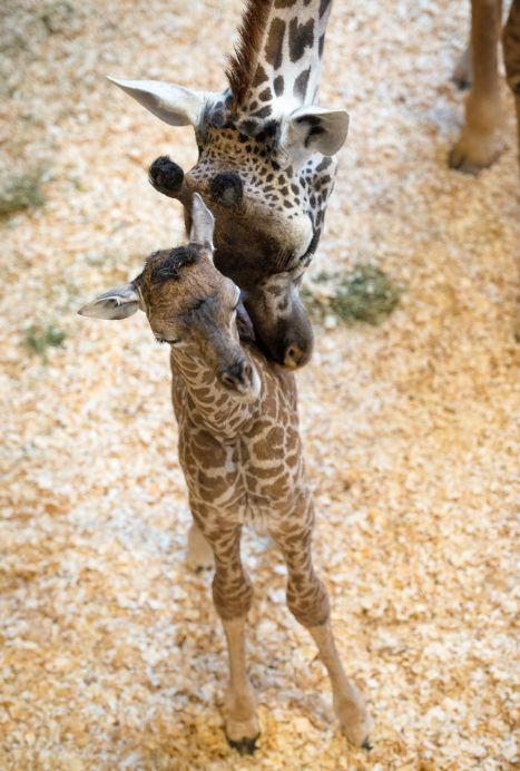 Photo credit: Stephanie Adams/Houston Zoo