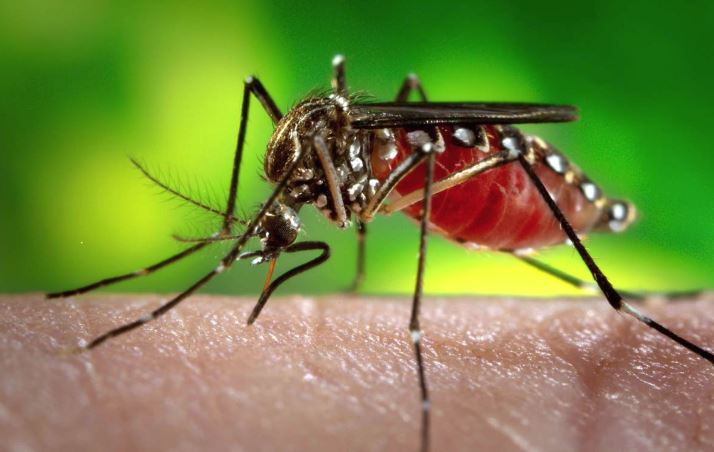 Mosquito season is back! Know how to protect yourself and your family against the Zika virus